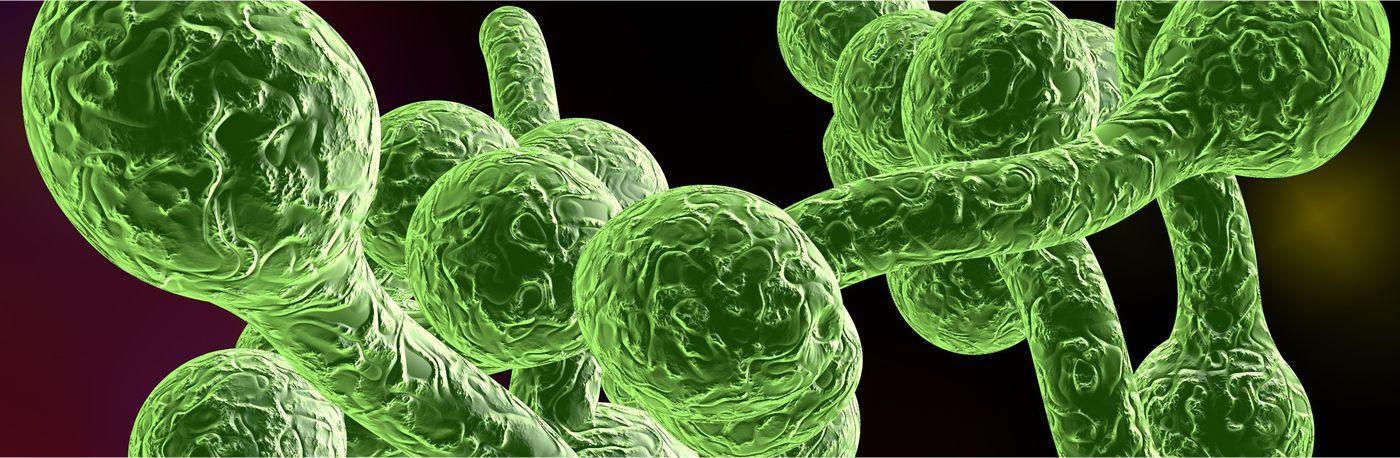 Wykrywanie pasożytów